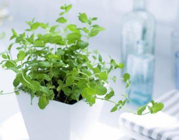 家居风水植物摆放禁忌你真的懂吗