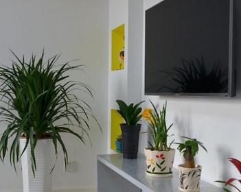 客厅植物摆放风水 客厅放什么植物好