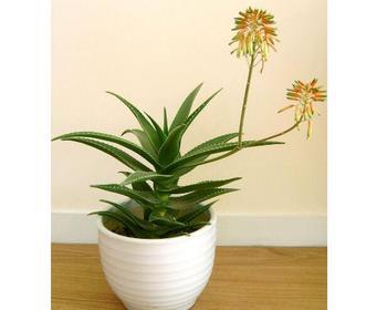 不适合室内摆放的植物有哪些
