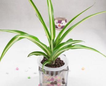 适合室内养的植物有哪些