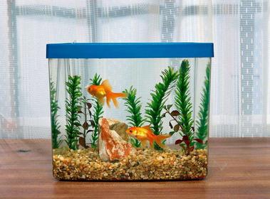 鱼缸的摆放风水方位 鱼缸摆哪好